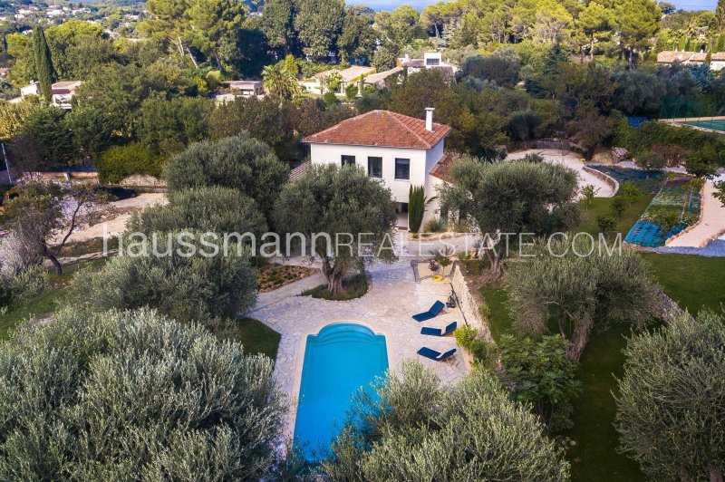the charm of olive trees
